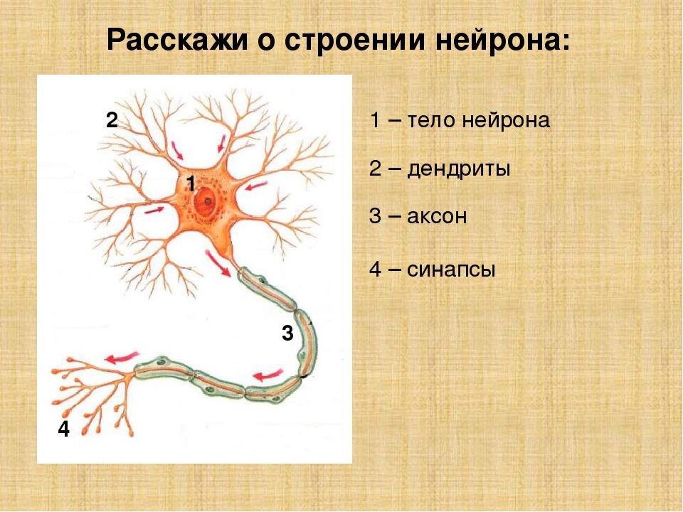 как картинка нейрона с обозначениями нового года осталось