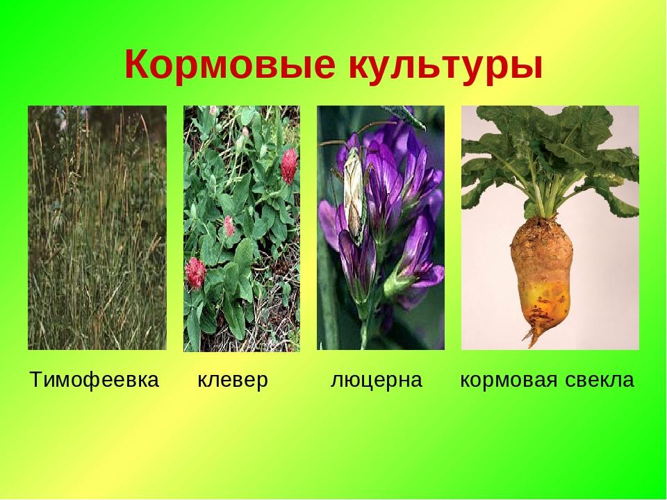 Кормовые растения названия и фото