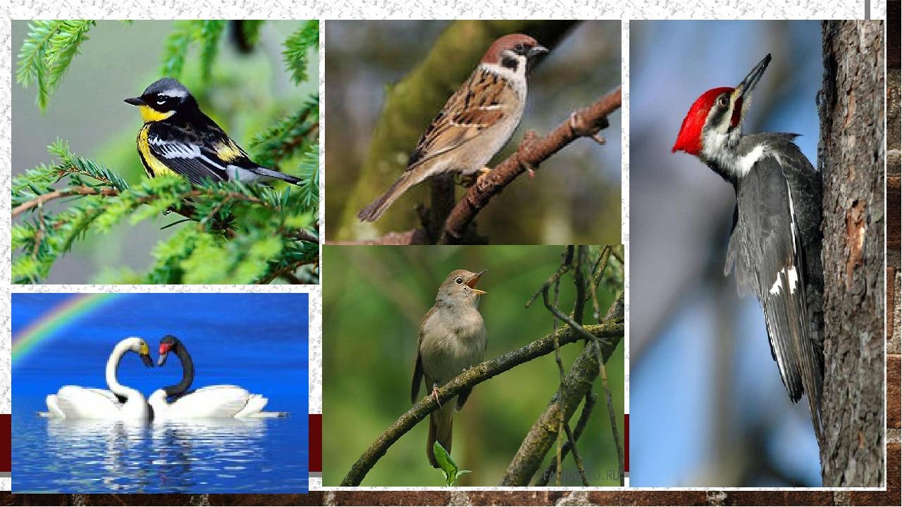 Конспект мастер-класса для родителей и детей Птица счастья