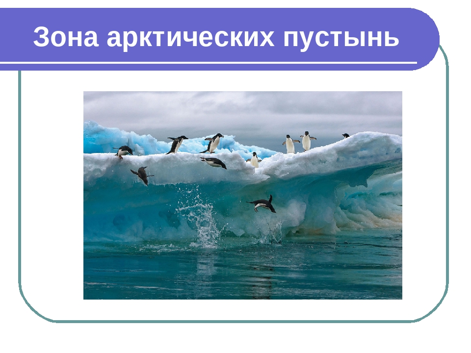 оборудование арктические пустыни картинки с описанием момент