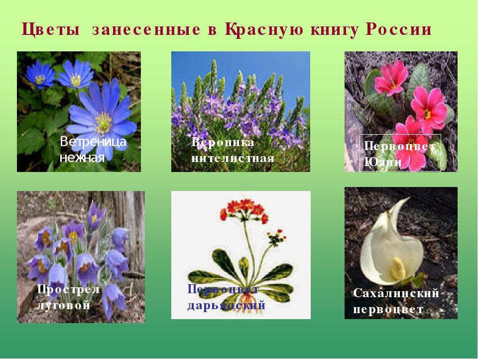 Цветы с красной книги картинки