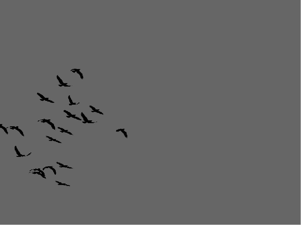 тебе картинки анимация птицы в полете юные