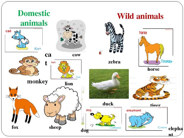 essay domestic animals kids All animals have nervous systems they can feel, both physically and emotionally, therefore, it should be illegal to abuse any animal, not just domesticated ones some may argue that because animals do not think and act like a human being, that they should not be treated like them ergo, animals should not have rights, or be.