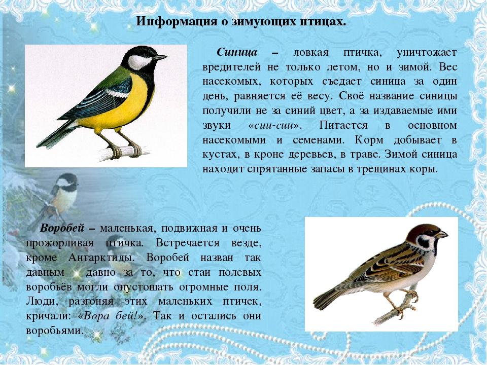 сообщение о птицах с картинками пища твердая, муха