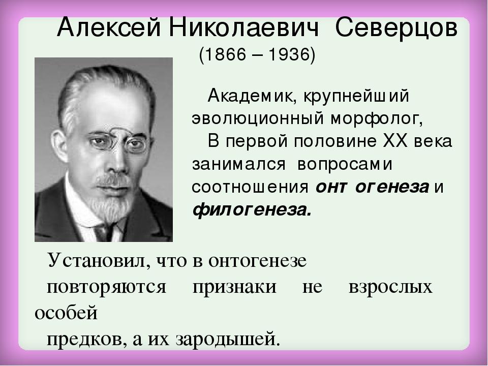 Алексей Николаевич Северцов (1866 – 1936) Академик, крупнейший эволюционный м...
