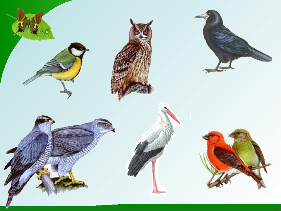 наглядные картинки птиц