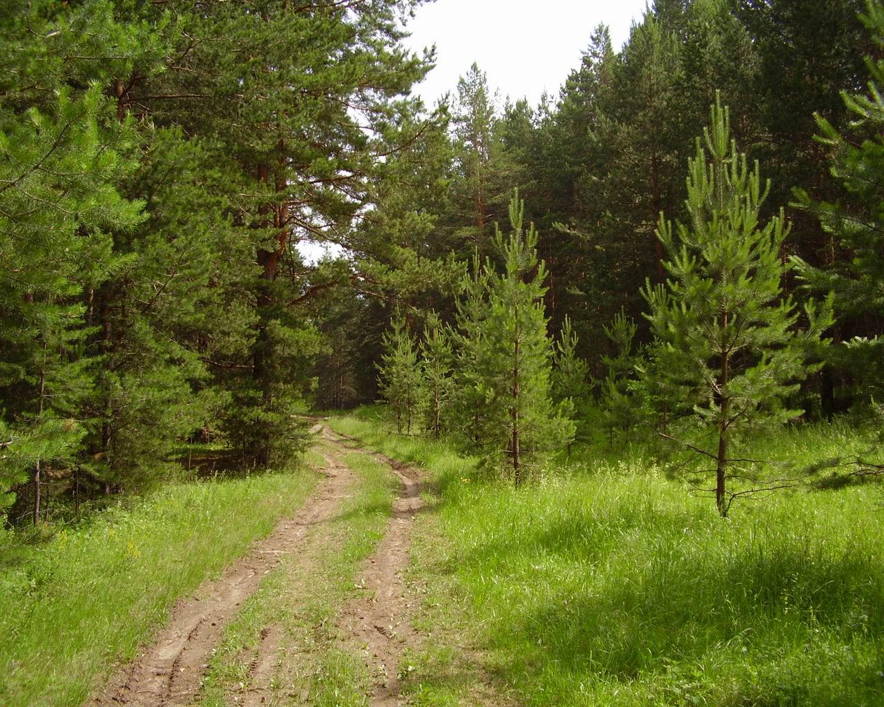 Лес зимней заготовки старообрядцы