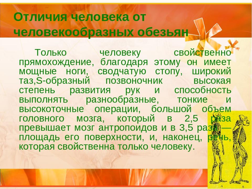Отличия человека от человекообразных обезьян Только человеку свойственно пр...