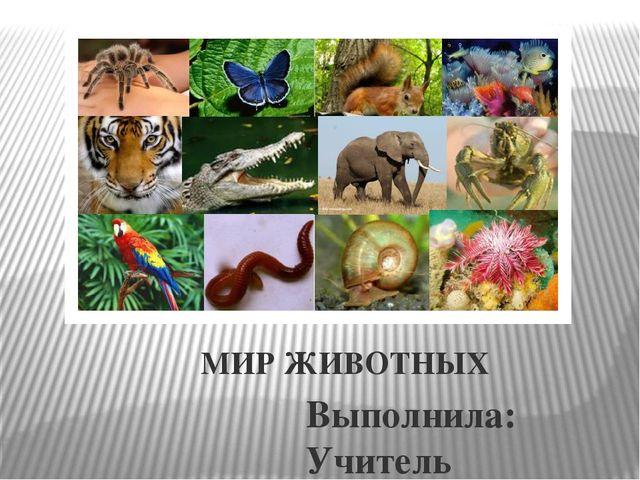 Реферат удивительный мир животных 4454