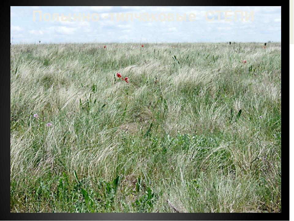 Животные и растения степи весной картинки