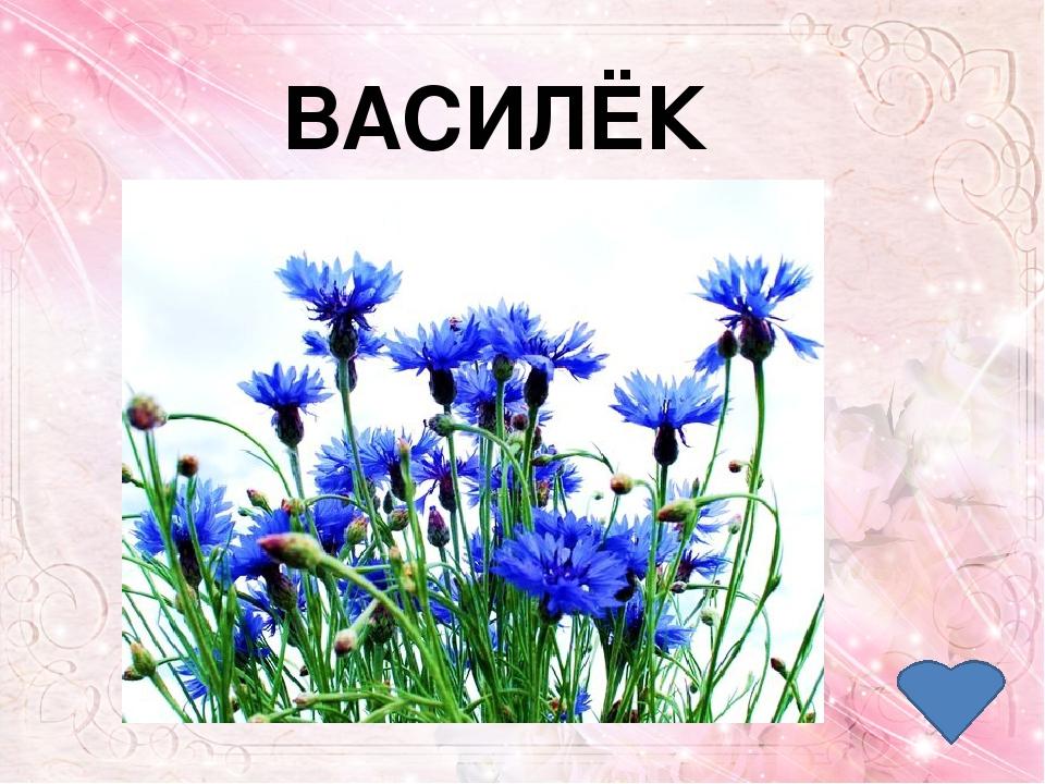 4 Цветок солнца – так называют его. В Россию он попал из Голландии. Долгие го...