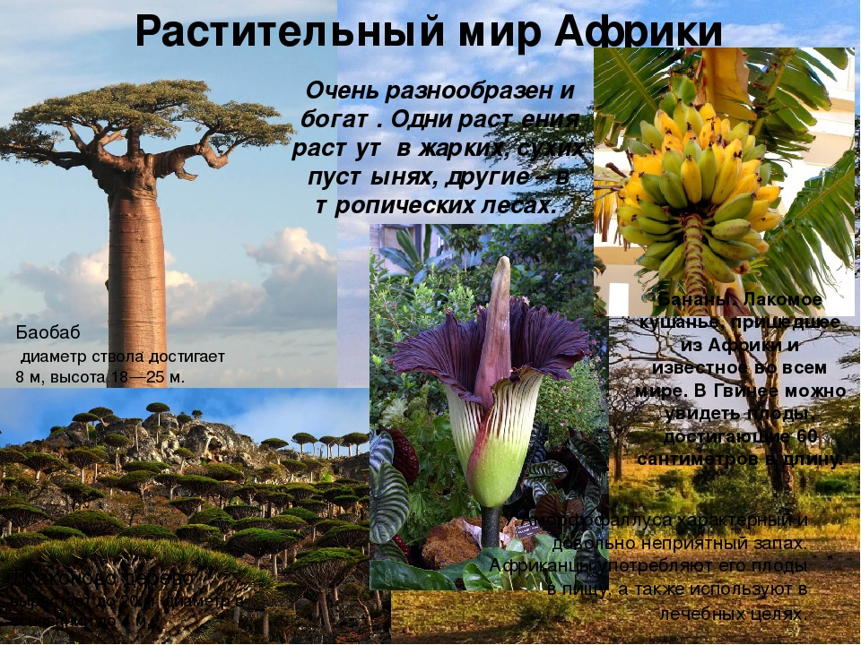 Растения африки список с фотографиями