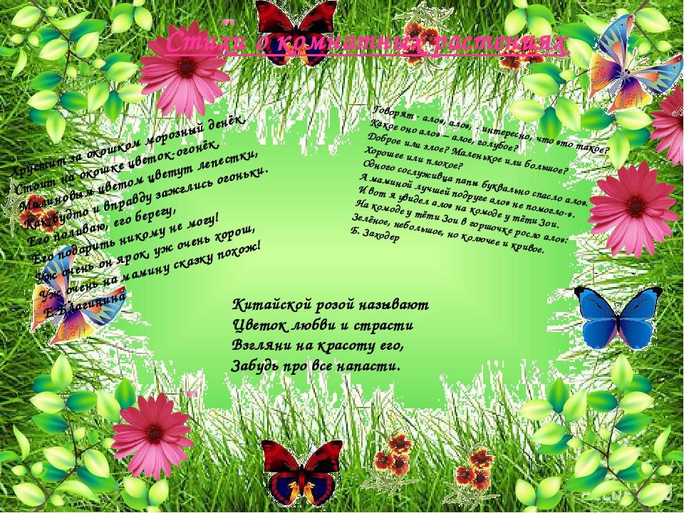 Стихи к подарку комнатный цветок 78