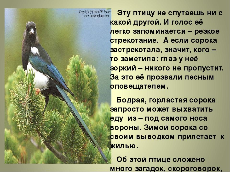 Эту птицу не спутаешь ни с какой другой. И голос её легко запоминается – рез...