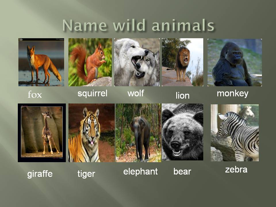 should we have wild animals as