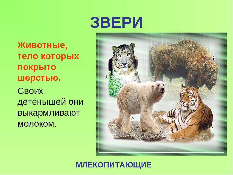 Слайды картинки про животных