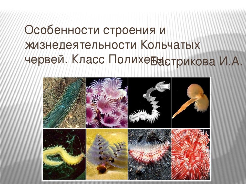 Особенности строения и жизнедеятельности Кольчатых червей. Класс Полихеты. Ба...