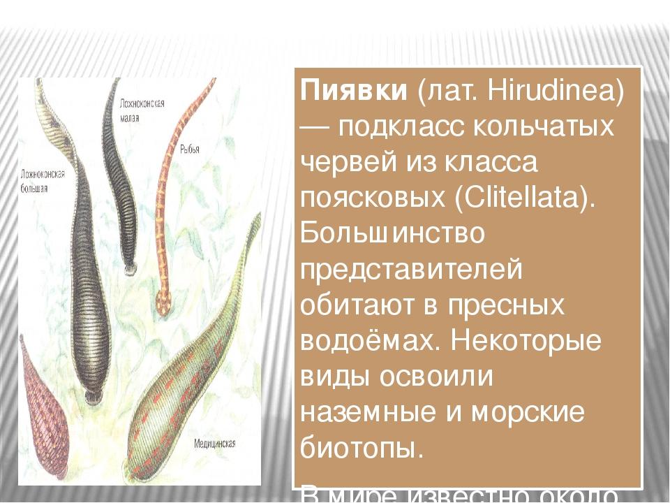 Пиявки (лат. Hirudinea) — подкласс кольчатых червей из класса поясковых (Clit...