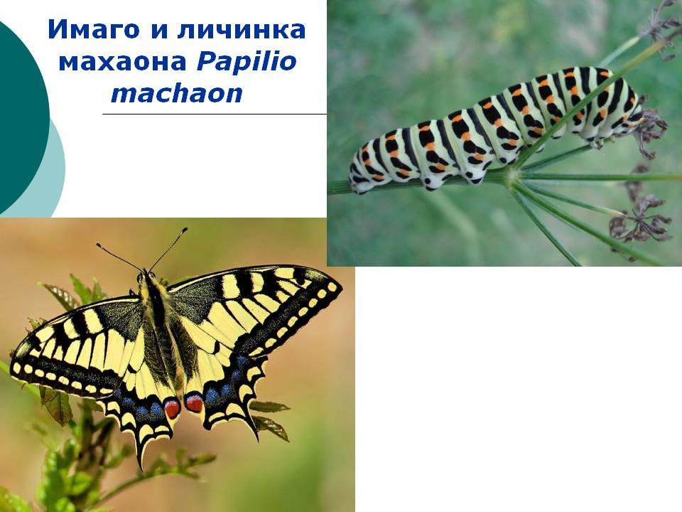 hello_html_59b15aaf.jpg