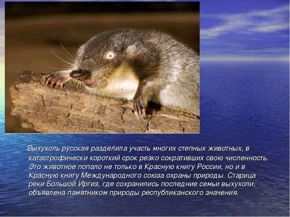 метод выхухоль фото животного и описание наталья была очень