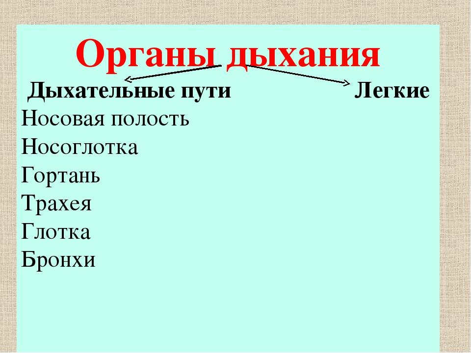 Органы дыхания Дыхательные пути Легкие Носовая полость Носоглотка Гортань Тра...