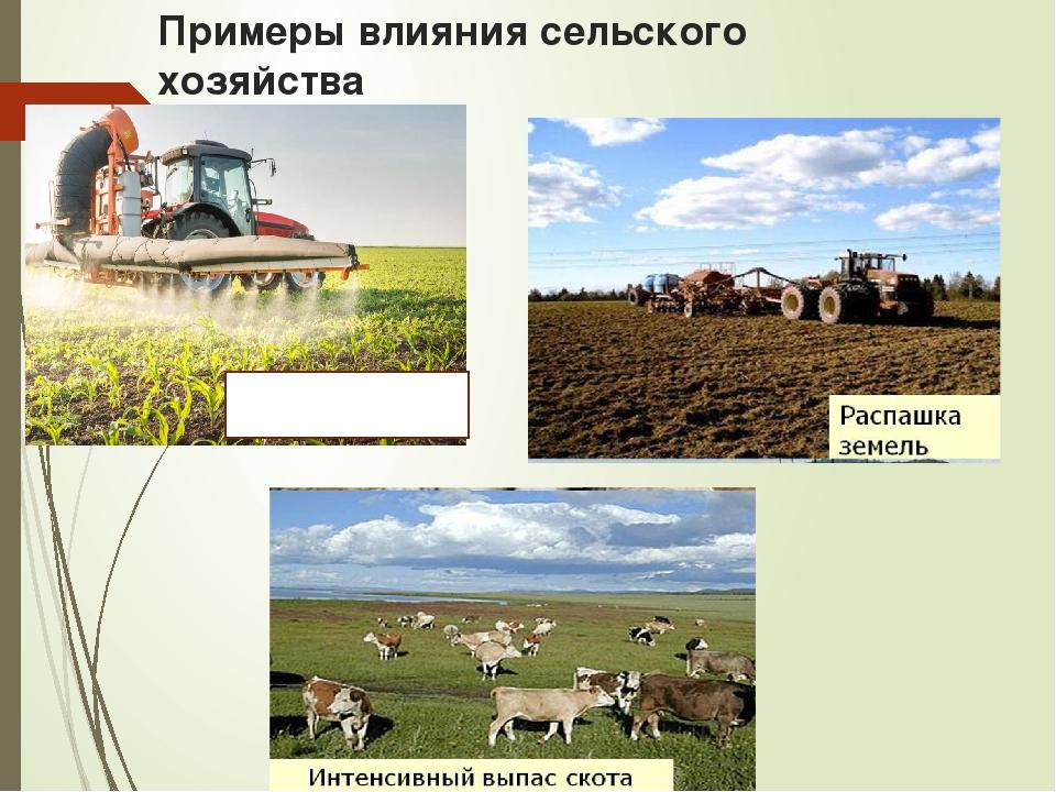 Примеры влияния сельского хозяйства Использование ядохимикатов