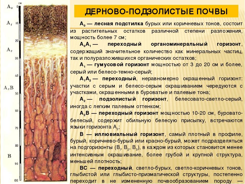 Дерново подзолистые почвы белоруссии