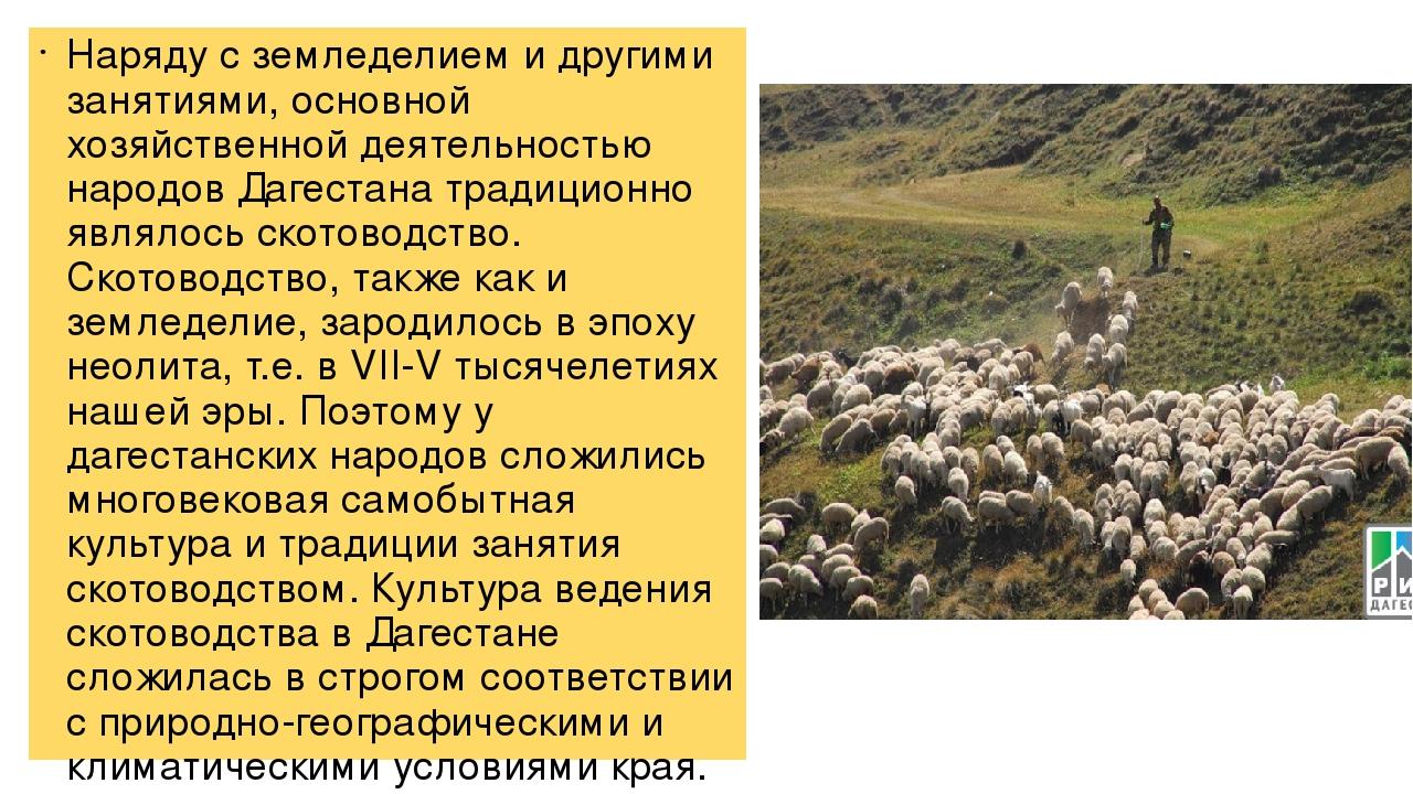 Скотоводство в дагестане реферат 6459