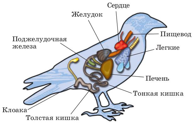Доклад на тему внешнее строение птиц 205
