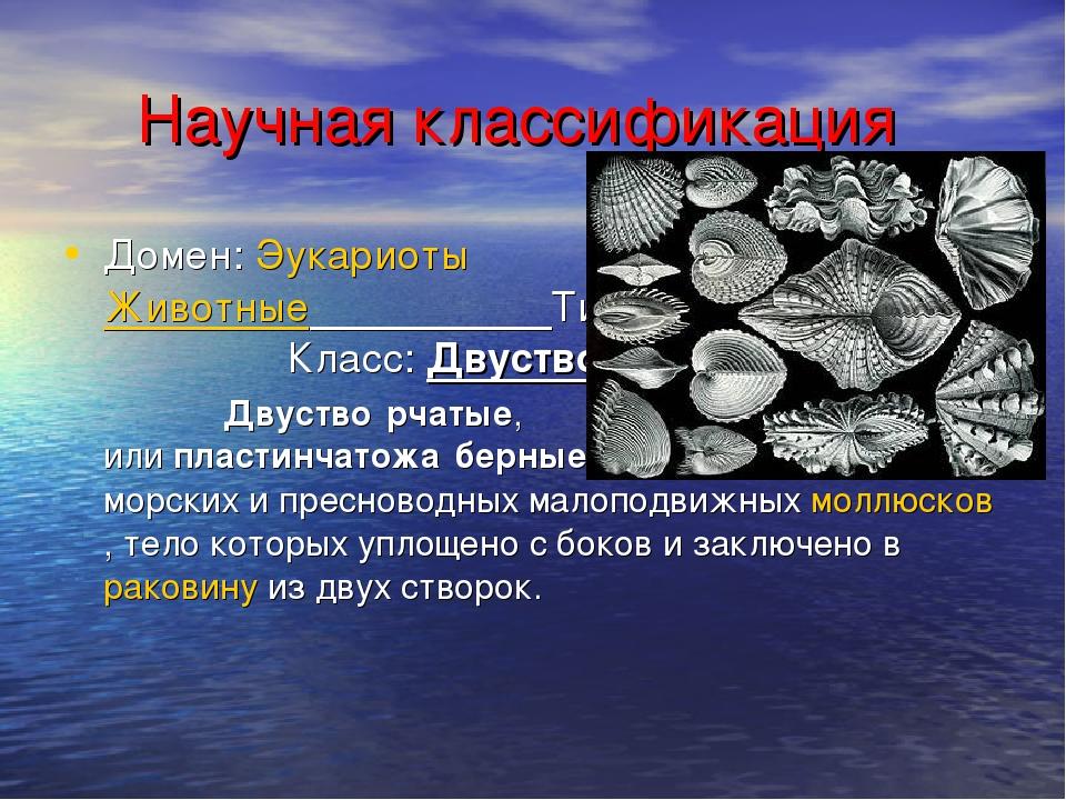 Научная классификация Домен:Эукариоты Царство:Животные Тип:Моллюски Класс...