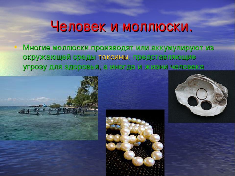 Человек и моллюски. Многие моллюски производят или аккумулируют из окружающе...