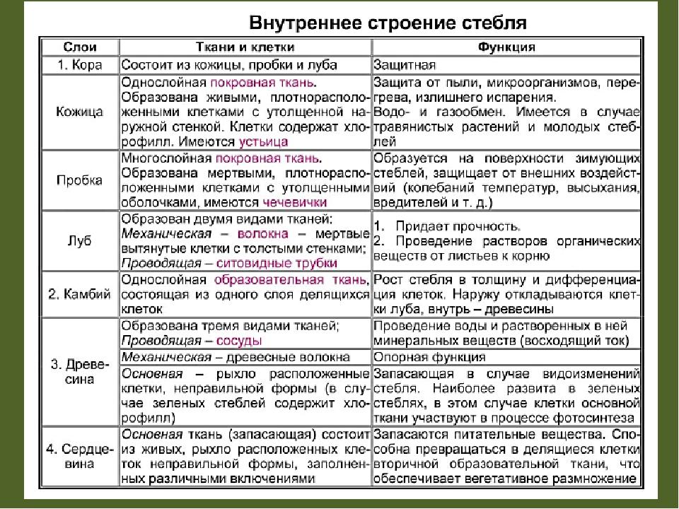 Гдз по биологии 6 таблица по строению стебля
