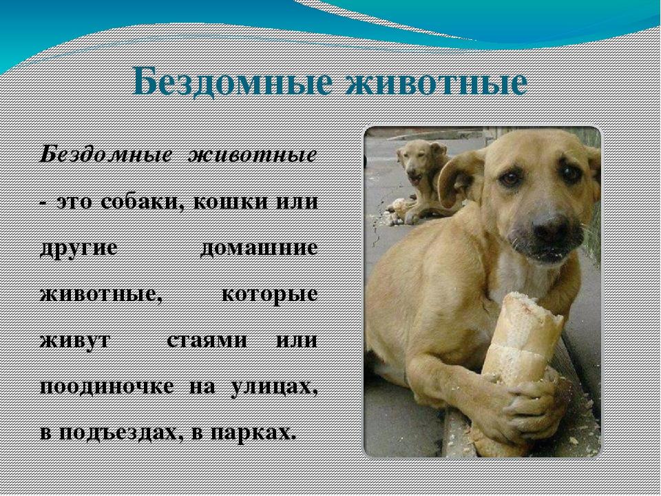 стихи для собаки любимой образом многие