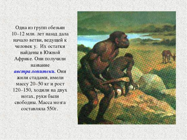 Одна из групп обезьян 10–12 млн. лет назад дала начало ветви, ведущей к чело...