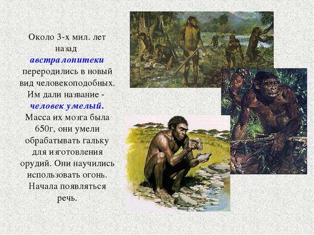 Около 3-х мил. лет назад австралопитеки переродились в новый вид человекоподо...