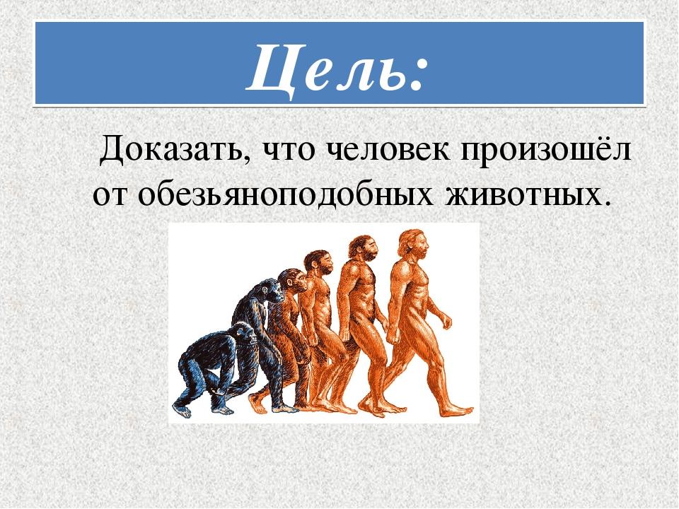 Цель: Доказать, что человек произошёл от обезьяноподобных животных.