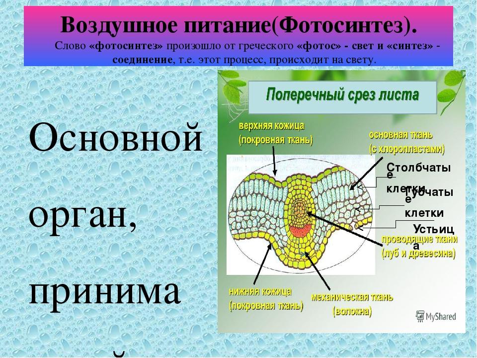 Воздушное питание растений фотосинтез презентация