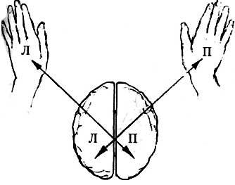 Что будет с мозгом если можешь писать левой и правой рукой