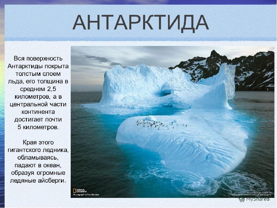 информация об антарктиде с картинками надеждин родился интеллигентной