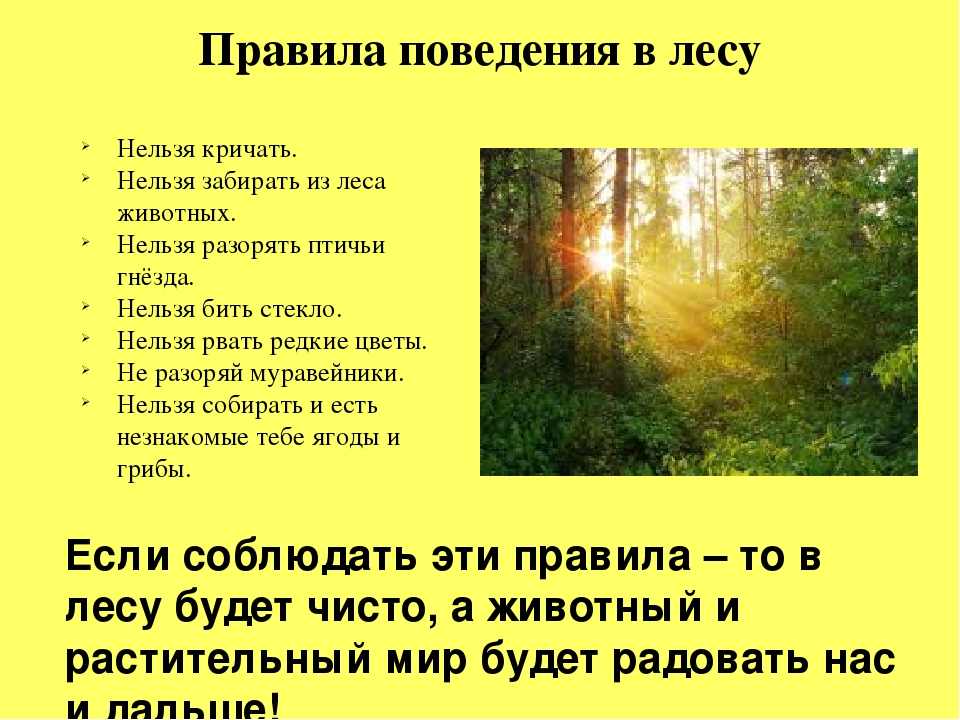 при правила поведения в лесу фото звезды, которые искренне