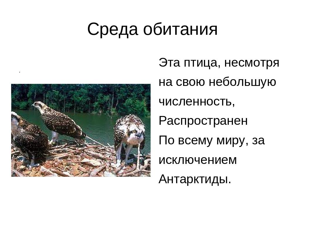 . Среда обитания Эта птица, несмотря на с Среда обитания Эта птица, несмотря...