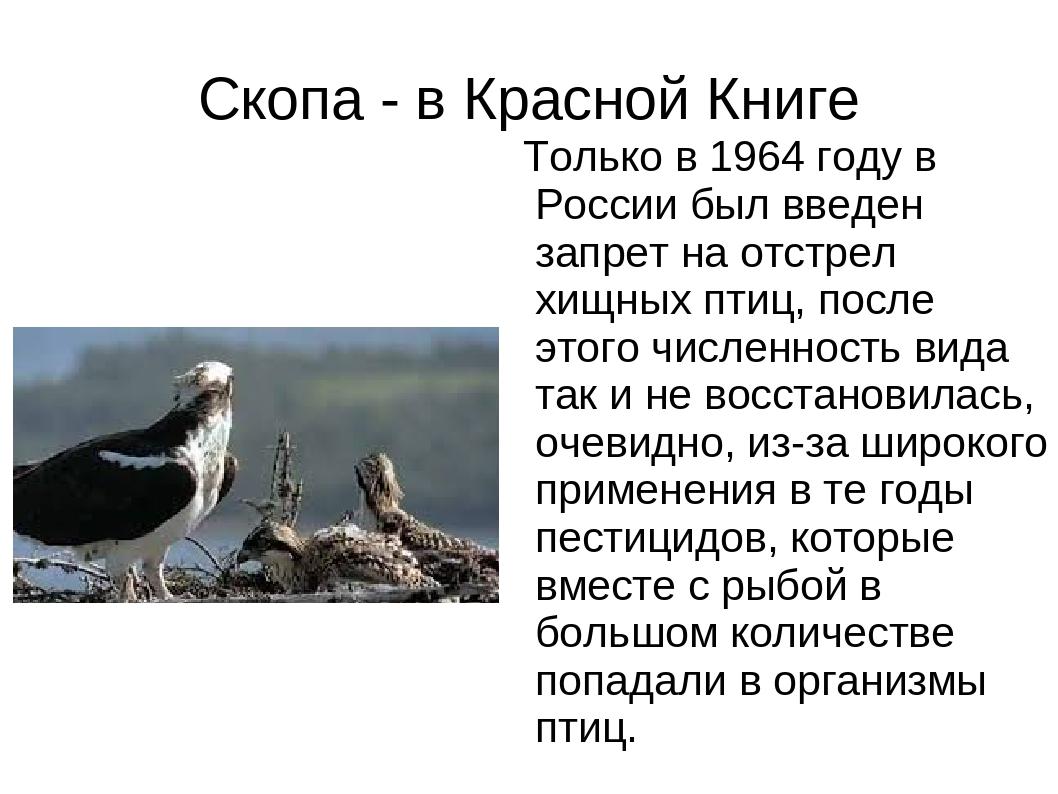 Скопа - в Красной Книге Только в 1964 году в России был введен запрет на отст...