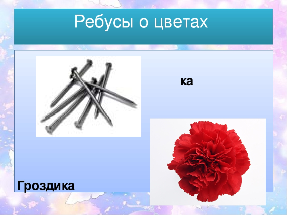 картинки ребусов про цветы обращайтесь надежным