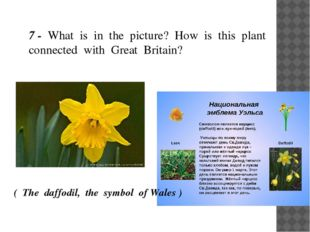 7 - What is in the picture? How is this plant connected with Great Britain?