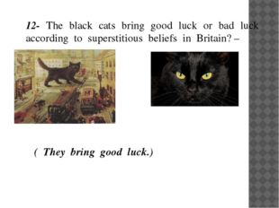 12- The black cats bring good luck or bad luck according to superstitious bel