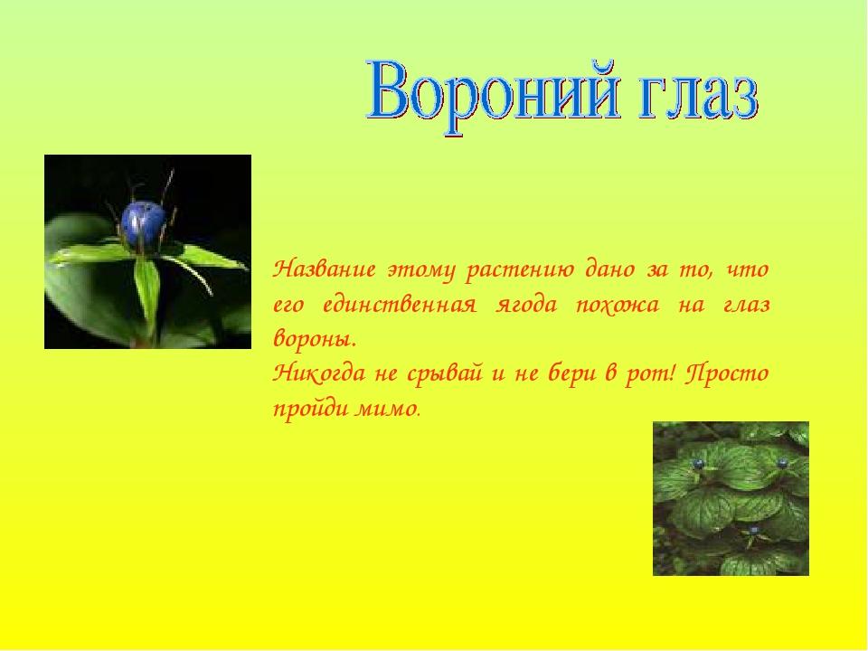 Название этому растению дано за то, что его единственная ягода похожа на глаз...