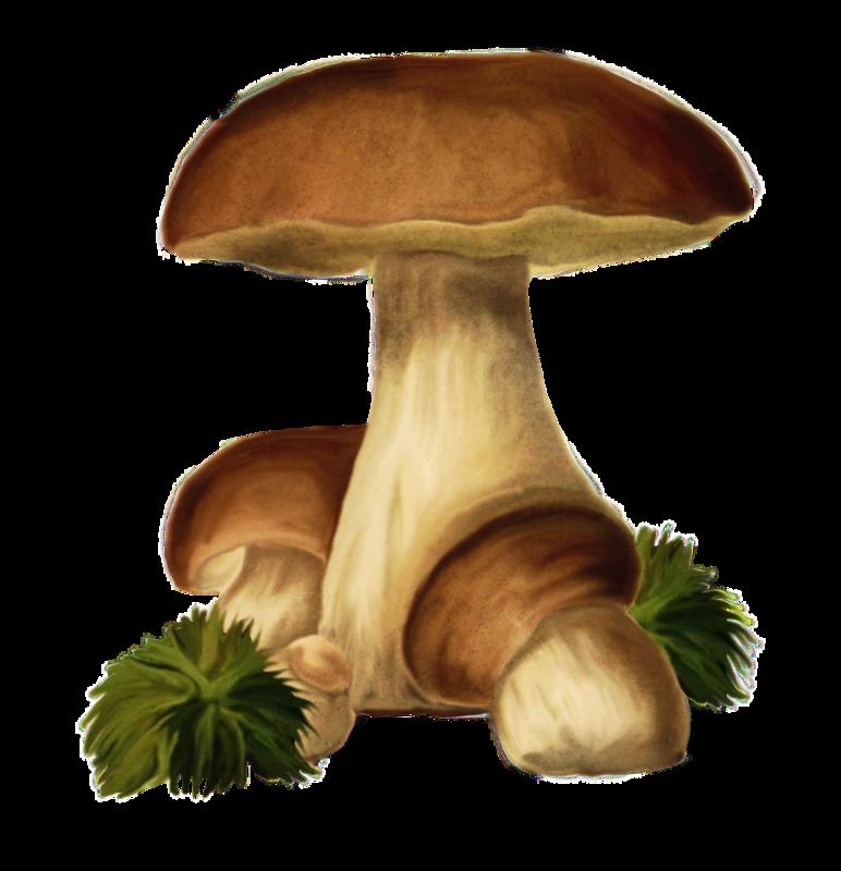 пригласили картинка гриба боровика для презентации сайте
