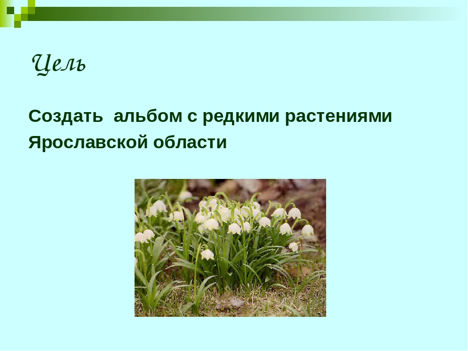 Цель Создать альбом с редкими растениями Ярославской области