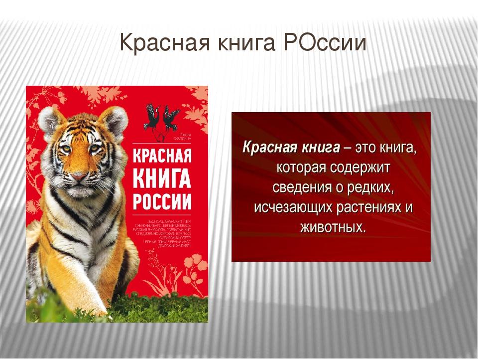прочного плакат о животных занесенных в красную книгу россии остатков теста
