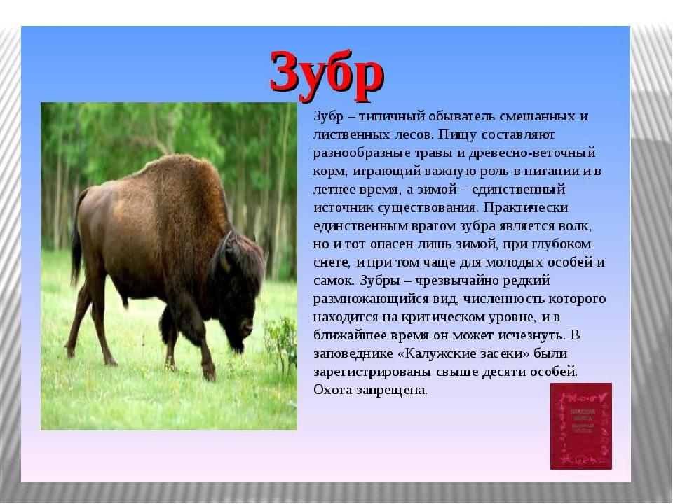 области животные описание фото орловской книги красной и
